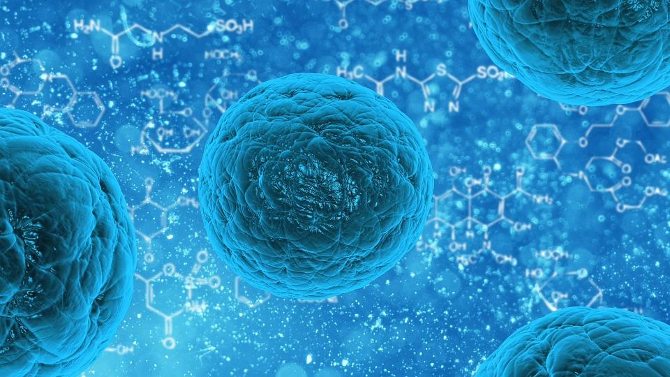Células madre para regenerar el cabello